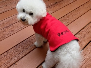 Best pet store selling pet clothes and accessories in USA 19