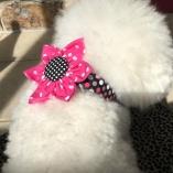 Hot Pink Dot Collar Flower for Dog Pet Collars