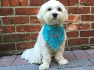 Best pet store selling pet clothes and accessories in USA 1