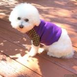 SASSY PAW Purple Dot Dog Pet Jersey