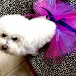 Tipped Pink and Purple Tutu Skirt for dogs and cats