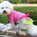 SASSY PAW Lime-Bone Pink Suzie Pullover Shirt Dress for dogs