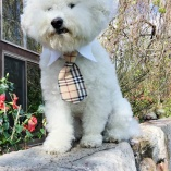 Classic Designer Tan Plaid Dog or Cat Shirt Collar and Tie