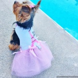Bella & Friends La Parisienne Pink Couture Tutu Dress for Luxury Pets