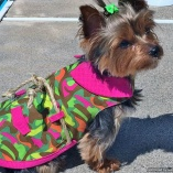 Bella & Friends Safari Camouflage Couture Dog Dress
