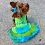 Bella & Friends #Selfie Lime Party Dress for Luxury Pets and Showoffs