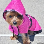 NATURE DOG Pink Dot and Floral Raincoat for Dogs