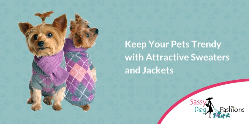 Keep Your Pets Trendy With Attractive Sweaters And Jackets
