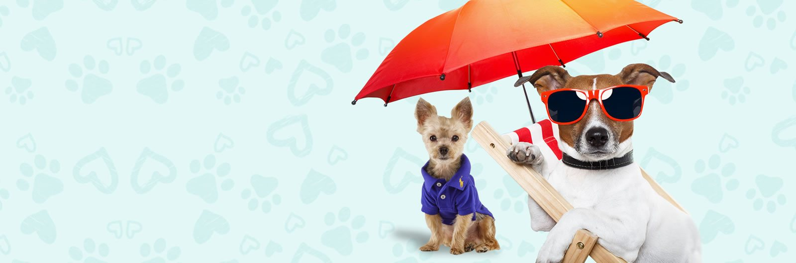 Best online store for pet clothing and accessories