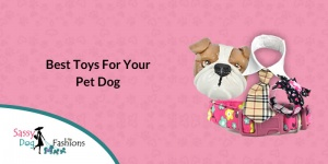 Best Toys For Your Pet Dog