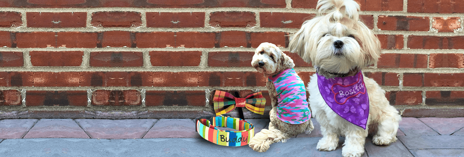 Pet accessories available online in USA