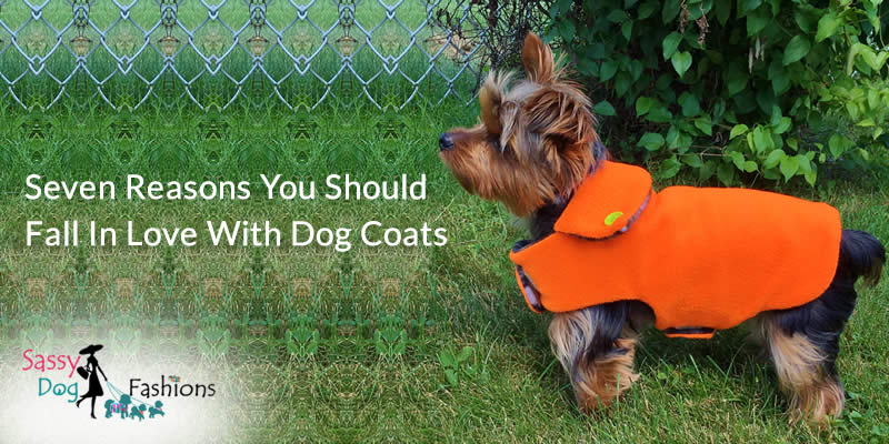 Seven Reasons You Should Fall in Love with Dog Coats
