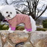 Sassy Dog Sleeper Dog Pajamas Jumper in Magenta and Lime
