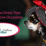 how do you dress your pet for festive occasions