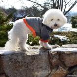Customized Long Sleeve Fleece Dog Pullover – FREE CUSTOMIZATION!