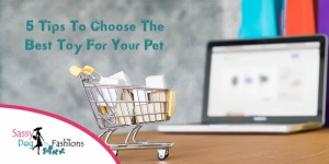 5 tips to choose the best toy for your pet