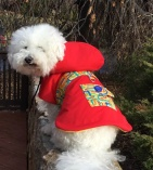 NATURE DOG Waterproof OUTERWEAR for Dogs in Classical Red with Multi-color Links